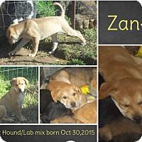 Adopt A Pet :: Zane in CT - Manchester, CT