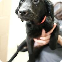 Adopt A Pet :: Mona Lisa - Appleton, WI