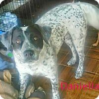 Adopt A Pet :: Daniella - House Springs, MO