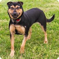 Adopt A Pet :: Tina - Enfield, CT