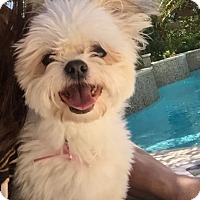 Adopt A Pet :: Lexie - Henderson, NV