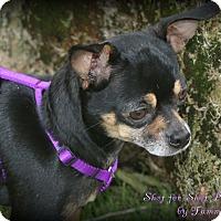 Adopt A Pet :: Tina - Lodi, CA