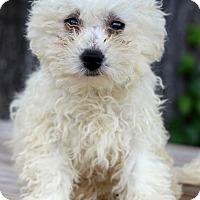 Adopt A Pet :: Donnie - Waldorf, MD