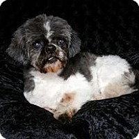 Adopt A Pet :: Ernie Ranger - Urbana, OH
