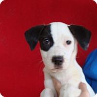 Adopt A Pet :: Maxie - Oviedo, FL