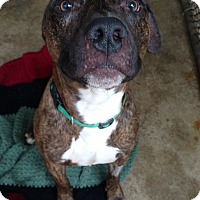 Adopt A Pet :: Avalor - Pottsville, PA
