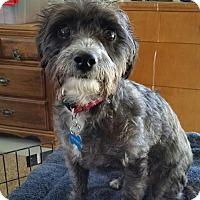 Adopt A Pet :: Lulu - Gig Harbor, WA