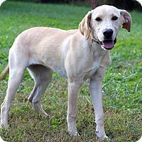Adopt A Pet :: Demi - Waldorf, MD