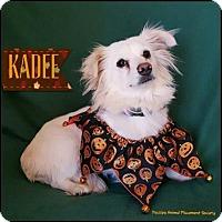 Adopt A Pet :: Kadee - Yucaipa, CA