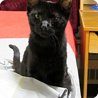 Adopt A Pet :: Portia - Grinnell, IA