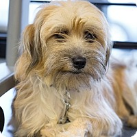 Adopt A Pet :: Fanny - Kirkland, QC