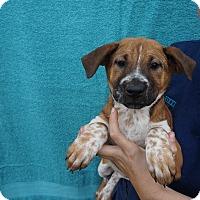 Adopt A Pet :: Terra - Oviedo, FL