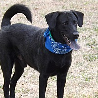 Shepherd (Unknown Type) Mix Dog for adoption in White Settlement, Texas - Jake aka Vidor