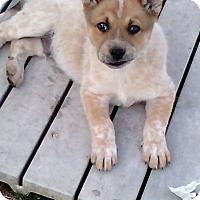 Adopt A Pet :: Garth - Southington, CT