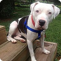 Adopt A Pet :: Frank (courtesy post) - Shavertown, PA