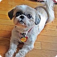 Adopt A Pet :: Nina - Toronto, ON