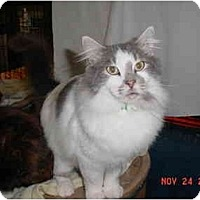 Adopt A Pet :: Pierre - Pendleton, OR