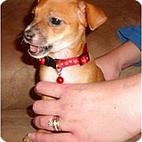 Adopt A Pet :: Squirt - Glen Burnie, MD