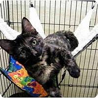 Adopt A Pet :: Thumbelina - Modesto, CA