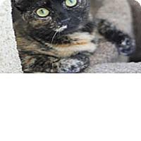 Adopt A Pet :: Dali - El Cajon, CA