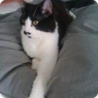 Adopt A Pet :: Maximilien - Vancouver, BC