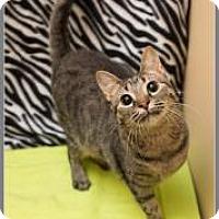 Adopt A Pet :: Angela - McDonough, GA