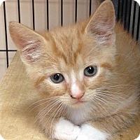 Adopt A Pet :: Noodles - East Brunswick, NJ