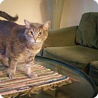 Adopt A Pet :: Lavender Violet Von Lovegood - Poway, CA