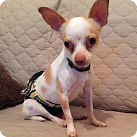 Adopt A Pet :: Binkie - Beavercreek, OH