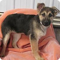 Adopt A Pet :: DHARMA ~ SO LOVING! - WOODSFIELD, OH