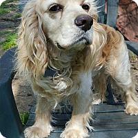 Adopt A Pet :: Fiero - Memphis, TN
