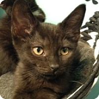 Adopt A Pet :: Tonka - Toronto, ON