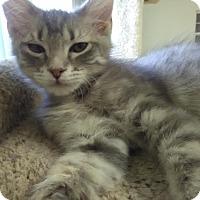 Adopt A Pet :: PIPER! - Owenboro, KY