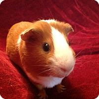 Adopt A Pet :: Rory - Williston, FL