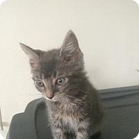 Adopt A Pet :: Posey - Clarkson, KY