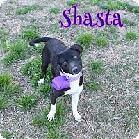 Adopt A Pet :: Shasta - Elburn, IL