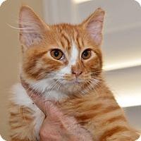 Adopt A Pet :: Sweet Potato - Davis, CA