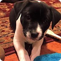 Adopt A Pet :: Hickory - Houston, TX