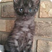 Adopt A Pet :: Forest 2 - Savannah, GA