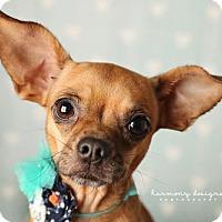 Adopt A Pet :: Merry - Nashville, TN