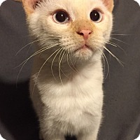Adopt A Pet :: Mickey - Woodstock, ON