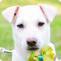 Adopt A Pet :: Steven - San Ramon, CA