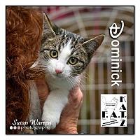 Adopt A Pet :: Dominick - Albuquerque, NM