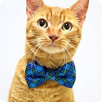 Adopt A Pet :: Roscoe - Dublin, CA
