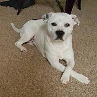 Adopt A Pet :: Gage - Asheboro, NC