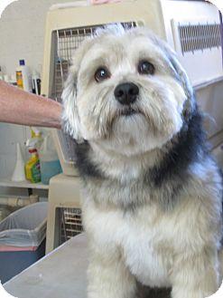 Mutt Love Dog Rescue El Paso Tx