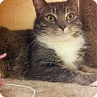 Adopt A Pet :: Olivia - West Dundee, IL