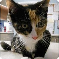 Adopt A Pet :: AnnaBelle - Maywood, NJ