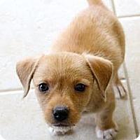 Adopt A Pet :: Rust - Midway, KY