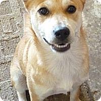Adopt A Pet :: AMBER - Paron, AR